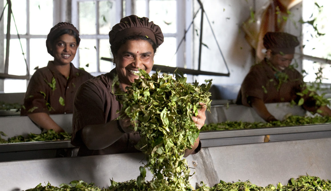 Tea_India_Processing_002.jpg