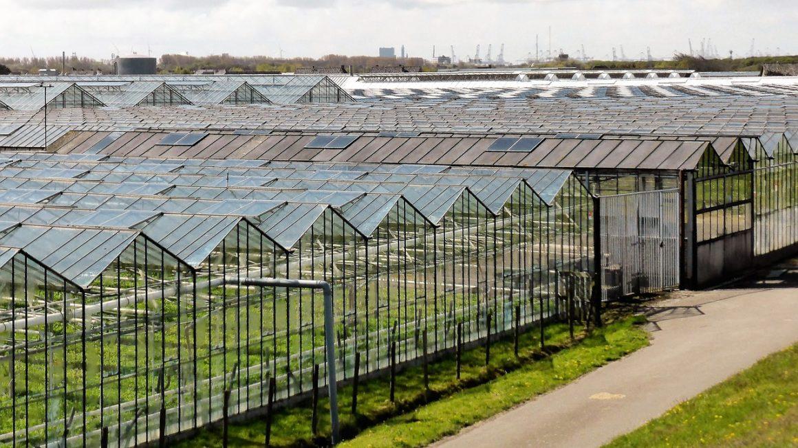 horticulture-2779709_1280