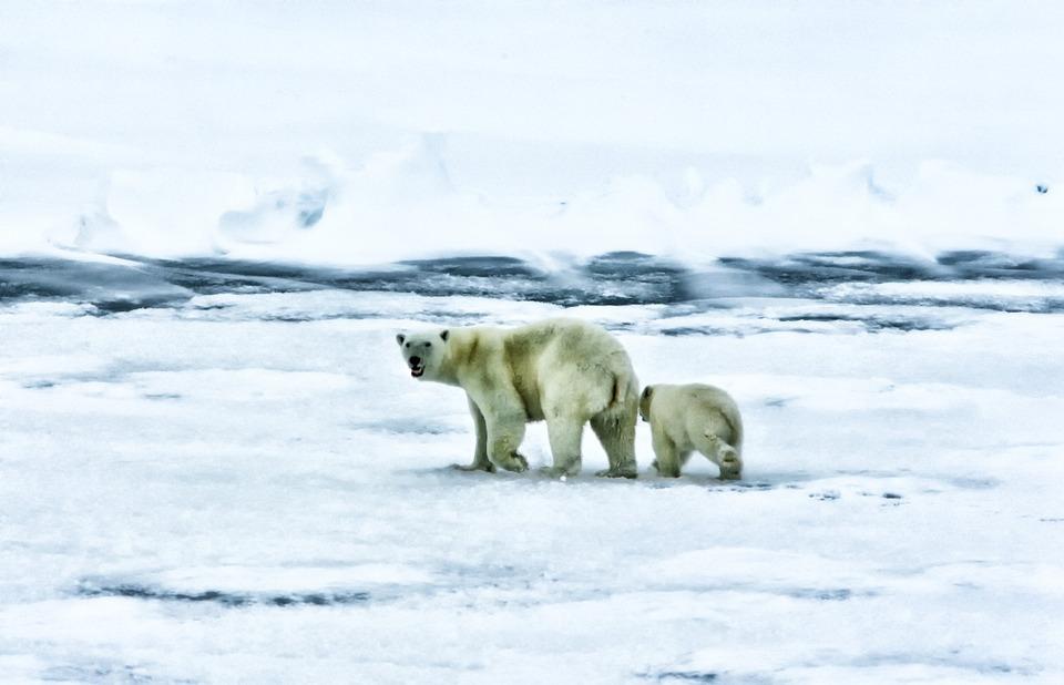 arctic-139397_960_720