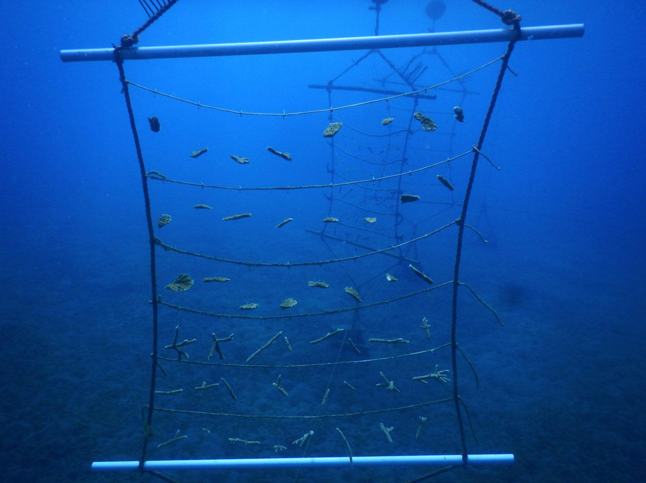 koraal-ladder1