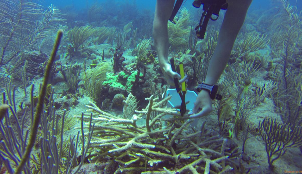 5-knippen-koraal