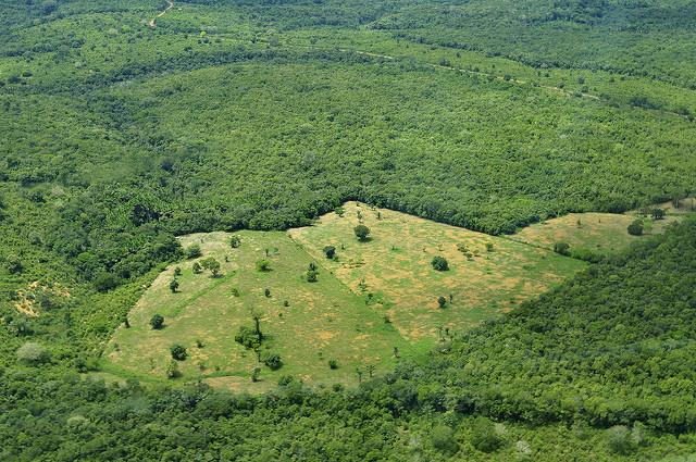Ontbost gebied in de Amazone; Neil Palmer (CIAT)