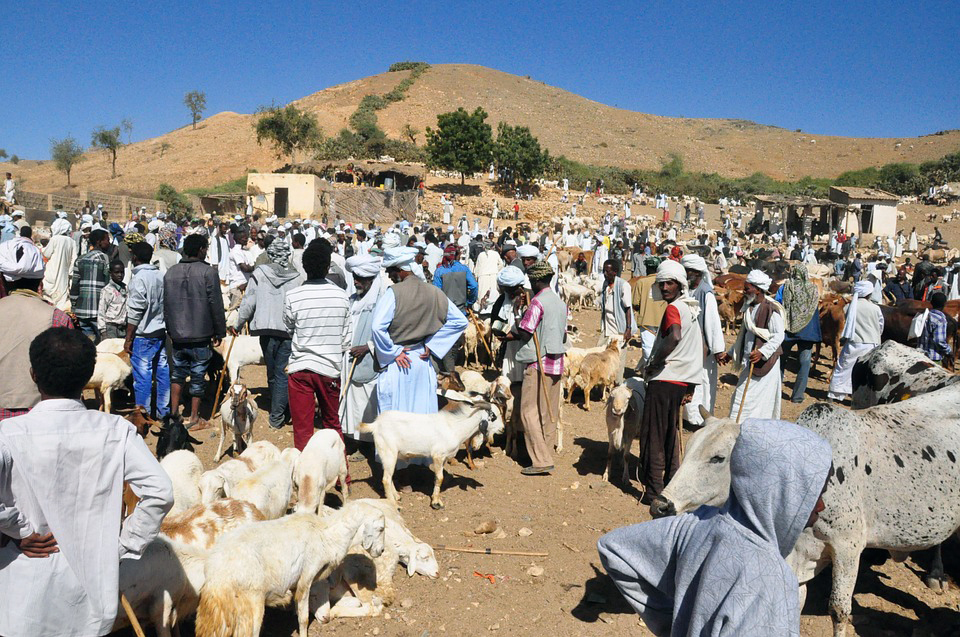 Keren Eritrea Animal Market