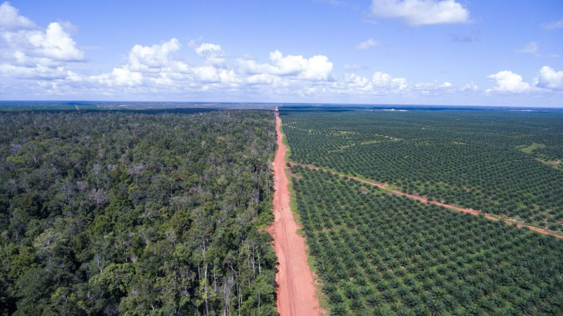 cc-Mighty-Boundary-between-the-palm-oil-plantation-owned-by-Posco-Daewoos-PT-Bio-with-still-intact-forests-5-june-2016_preview