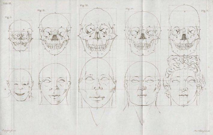 Petrus_Camper_facial_angles_by_son_Adriaan_Gilles_-_orangutan_to_classic_greek
