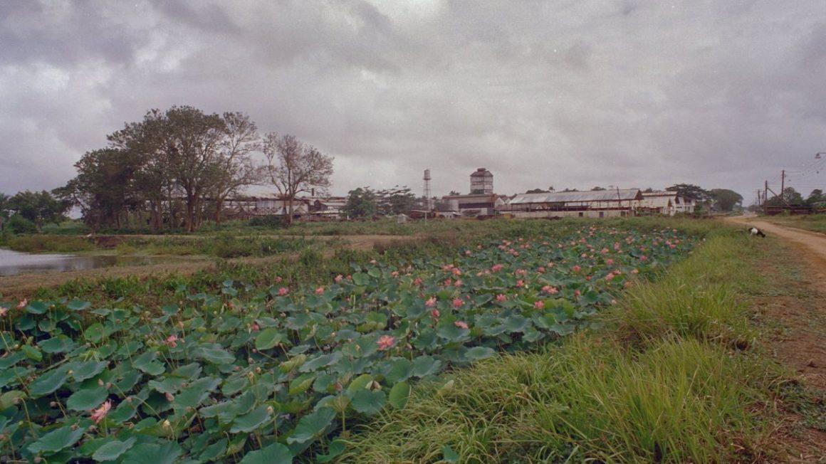 Oude suikerplantage Mariënburg