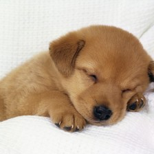 macexplorer.com-puppy-dog-26