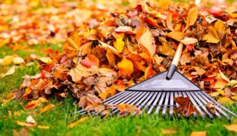 Autumn Feed
