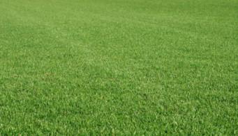 Greenest Turf