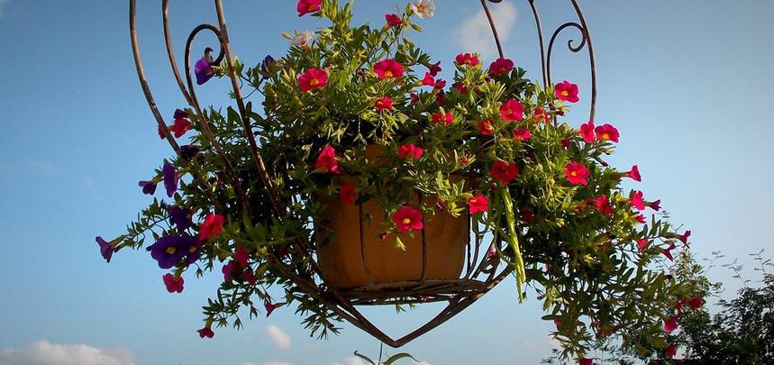 Beautiful Hanging Baskets