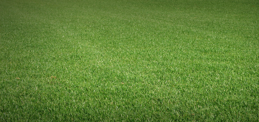 Greenest Turf Mixture