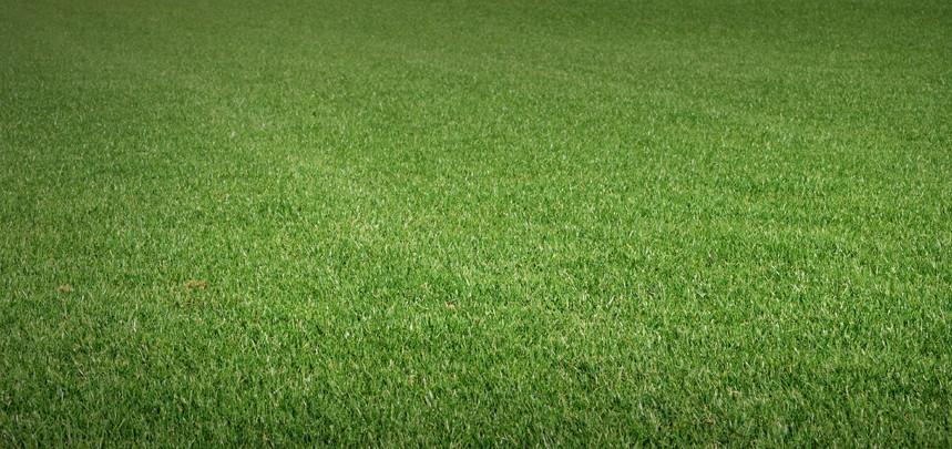 Greenest Turf Mixture