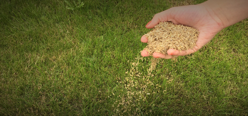 Overseeding Your Lawn