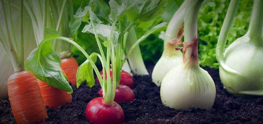 Growing Vegetables In Flower Beds