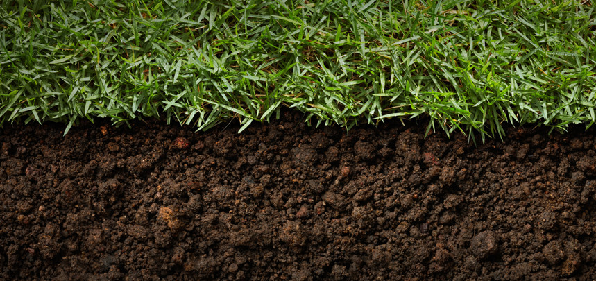 Troubleshooting Your Turf