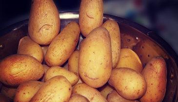 Potatoe 1