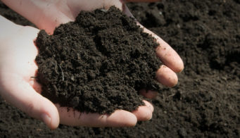 What Is Topsoil