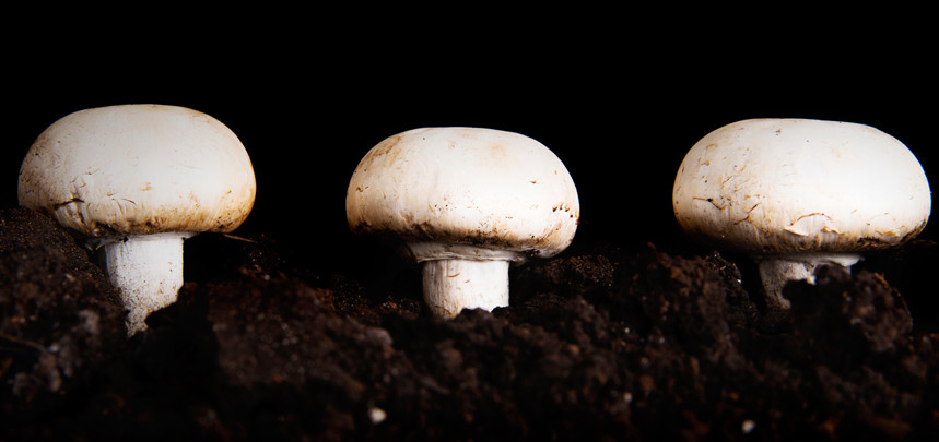 What Is Mushroom Compost