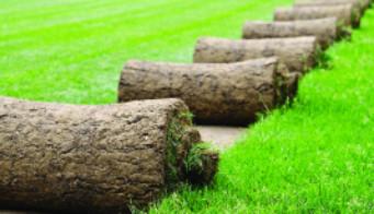 Buy Lawn Turf
