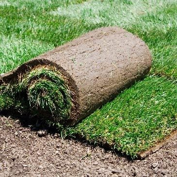 Info Northwest Turf Image Replacement 01