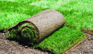 Cheapest Turf Prices