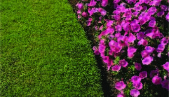 Lawn Edging Guide
