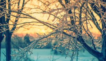 Mild Winter Weather