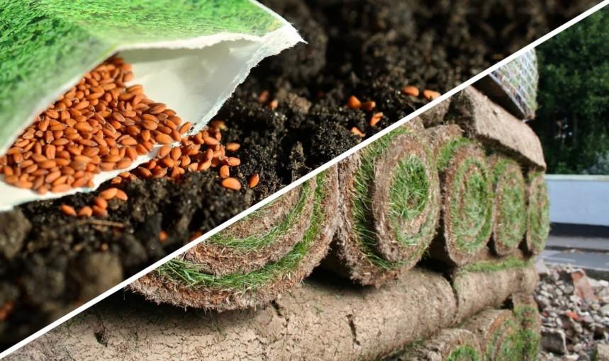 Seed Vs Turf