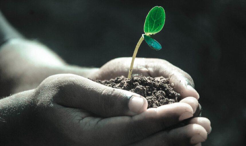 Soil Day