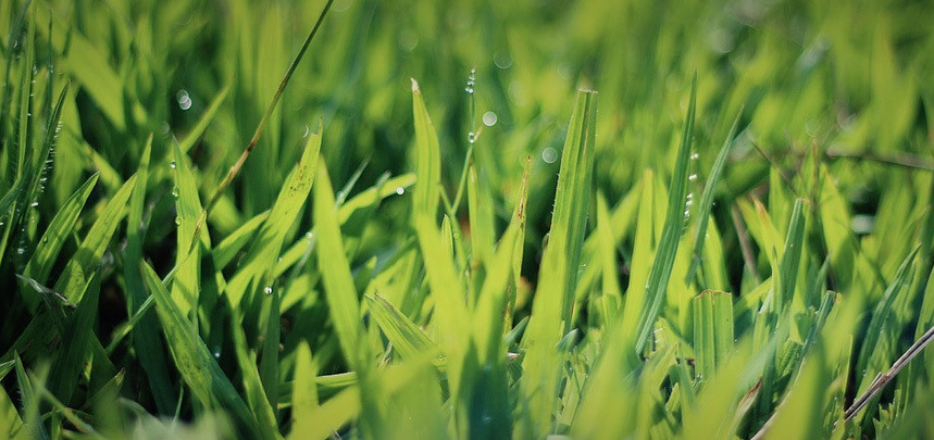 Lawn Thatch Main