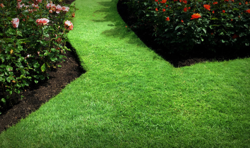 Tidy Lawn Edges