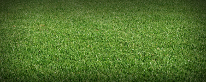 Turf Specification