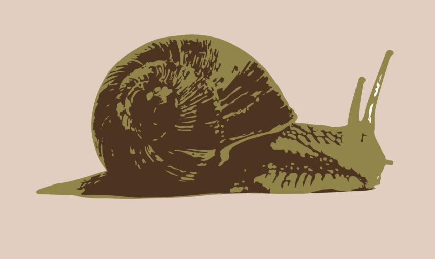 Custom snail