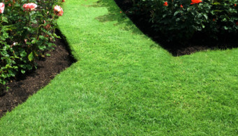 Tidy Lawn Edges Thumbnail