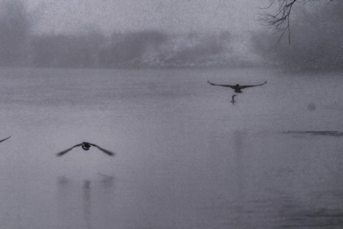 Genoeg te beleven voor vogelaars en fotografen