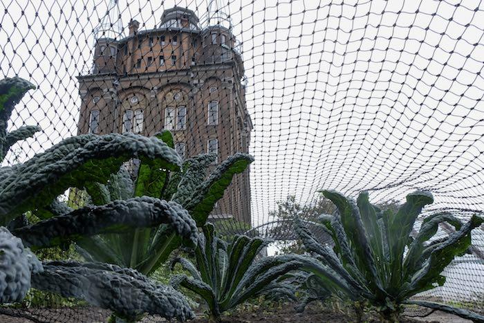 Cavolo nero ofwel palmkool in de tuin van Villa Augustus