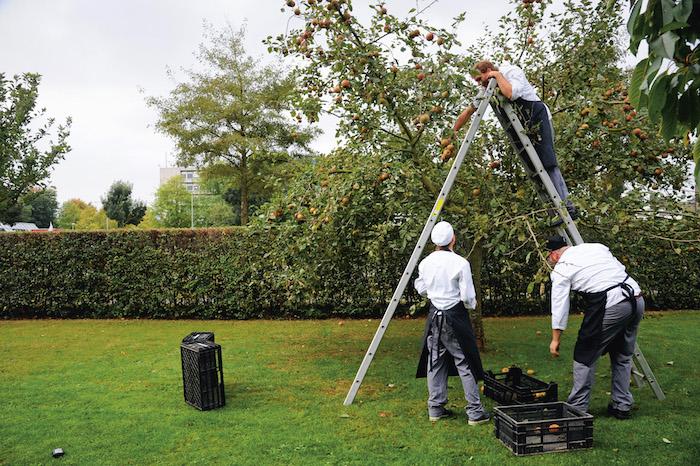 Fruitoogst in de boomgaard van Villa Augustus