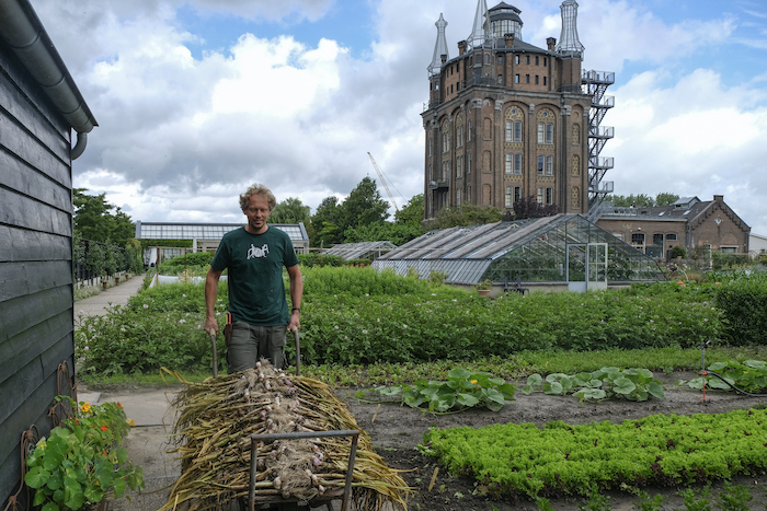 Tuinman Jelle met een oogst verse knoflook