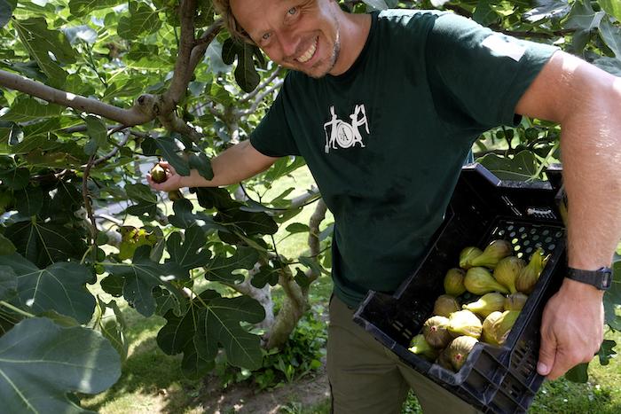 Tuinman Jelle met een verse oogst vijgen