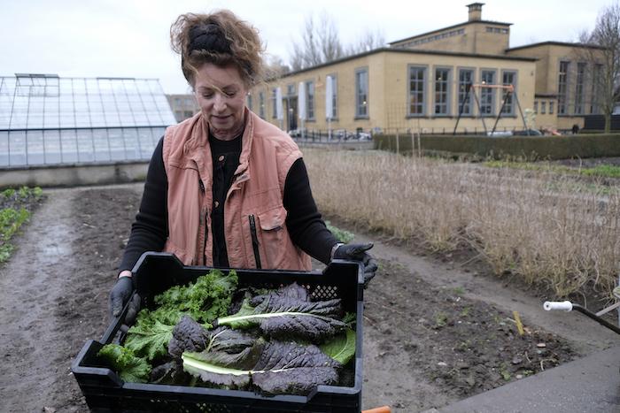 Kate met de oogst van de amsoi