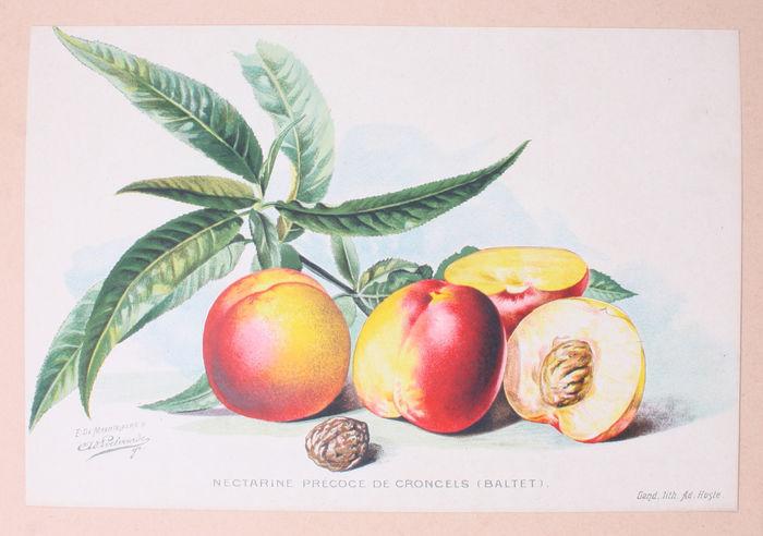 Nectarines van Les Frères Baltet