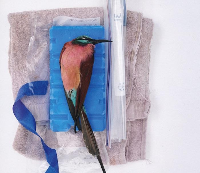 Vogel in het atelier van Sinke & Van Tongeren (fragment van een foto)