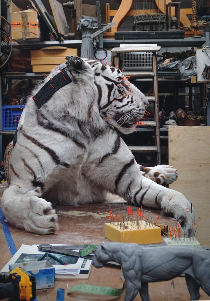 Witte tijger in het atelier van Sinke en Van Tongeren