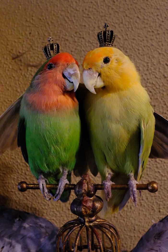 Tropische vogels met kroontje in Steen en Been