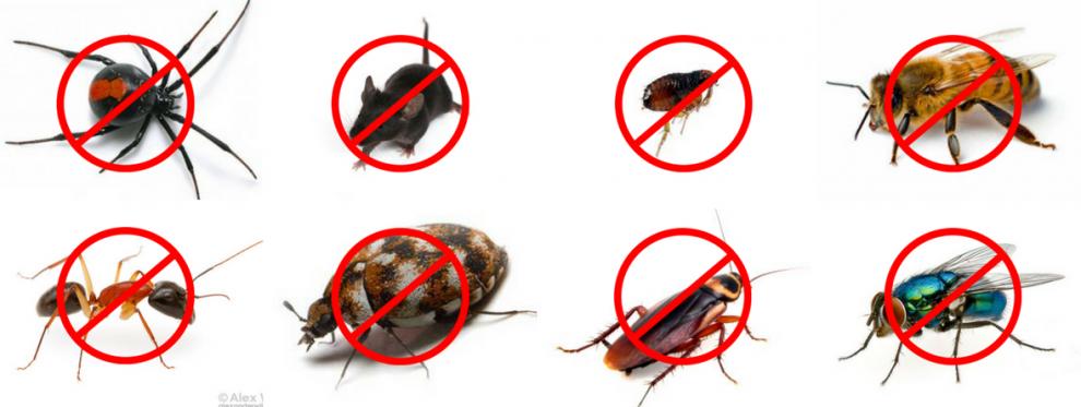 مكافحة الحشرات البلدية