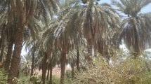 مدينة كتم في السودان