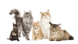 أفضل 5 أنواع قطط للبيع على موقع 4sale