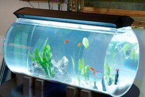 أنواع أحواض سمك