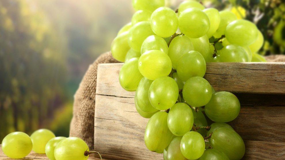 زراعة العنب