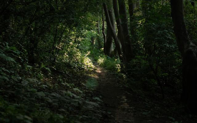 A path through dense woodland with sun filtering through the trees in the distance